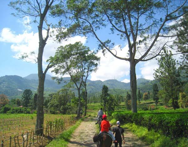 Gunung Mas Agrowisata