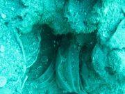 남부 술라웨시주 해역에는 17세기부터 2차 세계 대전까지 유물 더미가 20여 곳이 있는 것으로 알려졌다.